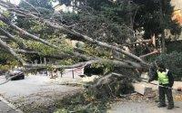 Bakıda ağac restoranın üstünə aşdı, dam örtüyü dağıldı - FOTO